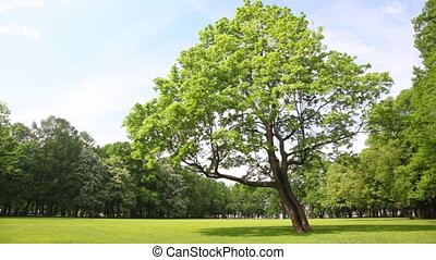 Green tree stands in clearing in city park - green tree...