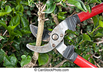 Pruning shears - Tree pruning sheers getting ready to cut...