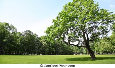 Panorama meadow in city park with green tree