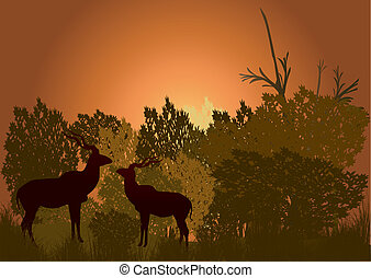 two kudu in the bush late eveinging - two silhouette kudu in...