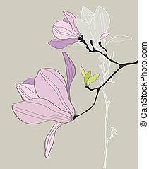 carte, stylisé, magnolia