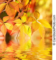 Autumn leaves in rendered water