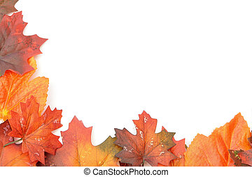 Autumn leaves border  - Autumn leaves on a white background