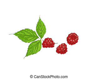 Raspberries - 3 raspberries with leaves on white background
