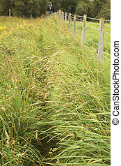 Public footpath near a fence - Tall grass on public footpath...
