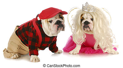 male and female dog - dog couple - male and female english...