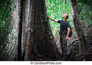 man in borneo jungle - caucasian man in taman negara jungle,...