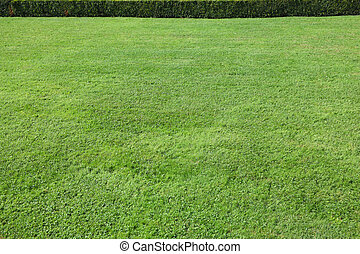 Magnificent green lawn in beautiful well-groomed park