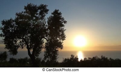 Closeup of a tree, a sea view from the hill, sunset sun...