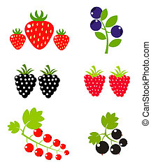 Berry fruits sweet collection Vector illustration