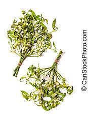 Mistletoe bouquets - Two mistletoe bouquets isolated on...
