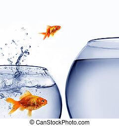 水, 金魚, 跳躍, 在外