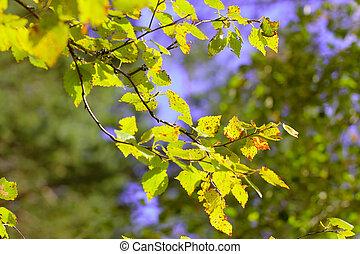 Sunlit Fall Leaves