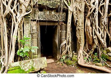 Ruinas, templos, angkor, wat, camboya