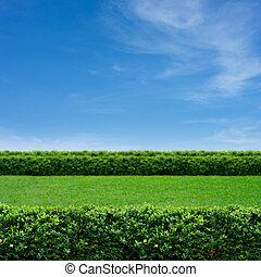 Grass and cloudy sky - Green grass and summer blue sky