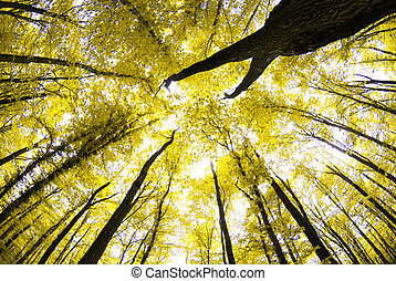 autumn trees in the forest