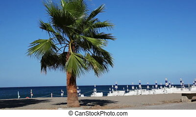 Wind rustles leaves high palm tree, standing by beach and...