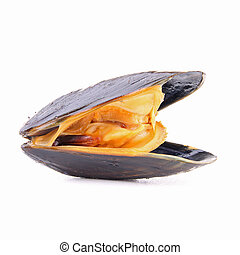 isolated mussel on white background