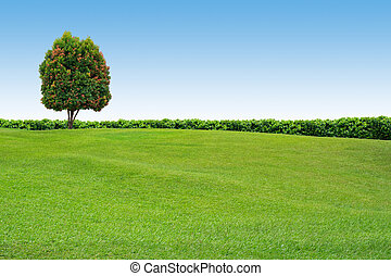 Grass and tree on clear sky - Grass field and tree on clear...