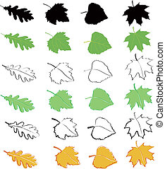 Oak, birch, poplar and maple leaves drawn in various styles