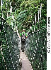 canopy bridge in taman negara, malaysia