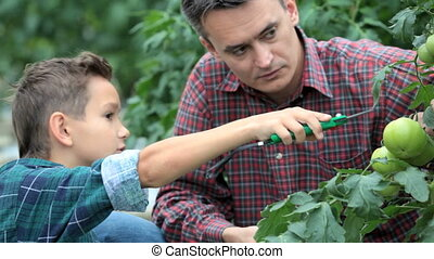 Looking forwards to harvest - Father and his son looking at...