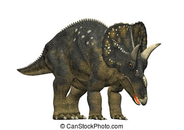 diceratops dinosaur eating and grazing a herbivorous...