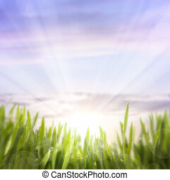 art abstract background of spring grass and sky