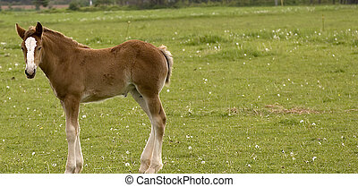 Small colt - Colt in a field in rural Prince Edward Island