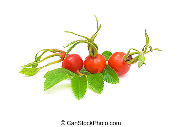 ripe red rose hips. - ripe red rose hips in close-up on a...