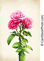 Watercolored rose - Illustration of watercolor rose on a...