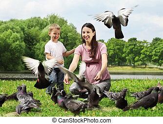 alimentación, palomas