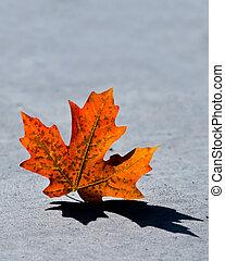 fall leaf - maple fall leaf