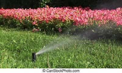 Stream of water pours on flowerbed of identical flowers from...