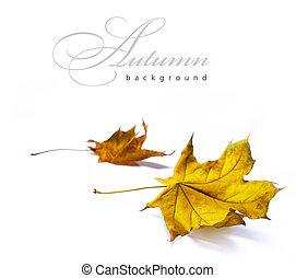 otoño, Extracto, fondos