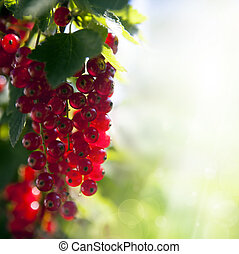 beautiful summer backdrop. Berries ripe red currants