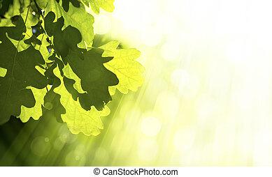 Art oak green leaves