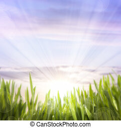 art abstract background of spring grass and sky - abstract...