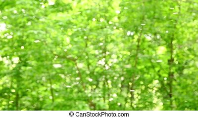 Fluff flies on background of fuzzy foliage, at sunny day