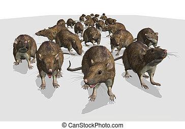 ejército, ratas