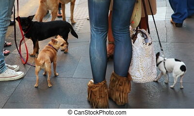 Small dogs at feet of their owners walk on streets