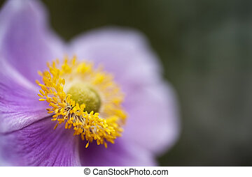 Purple and yellow wild flower with focus on pollen with shallow depth of field