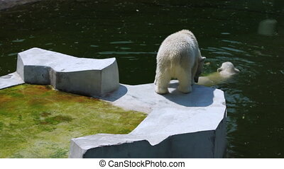 polar bear swim and another walk on platform near lake - one...