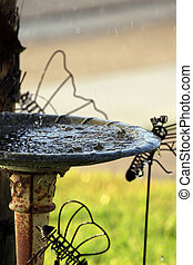 Bird Bath in the Rain - Water sparkling in the bird bath in...