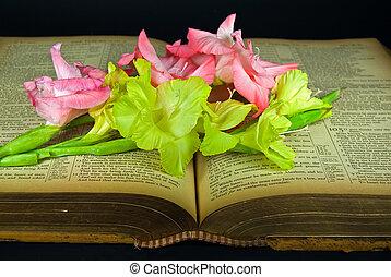 Gladiolas, vendimia, biblia