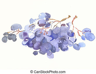 a grape by watercolour