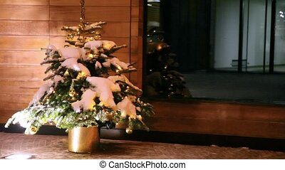 Elegant fir-tree stands in golden pot - Elegant fir-tree...