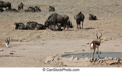At the desert waterhole