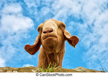 Humorous portrait of a goat - A humorous portrait of a brown...
