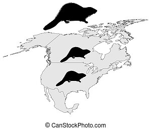 Distribution of canadian beaver